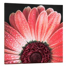 Pintdecor Noi Creiamo - Quadro RED DAISY - P4750